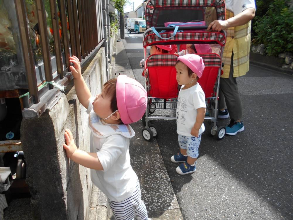 ひよこ組🐣お散歩に行きました!